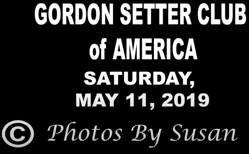 Gordon Setter Club of America - May 11, 2019