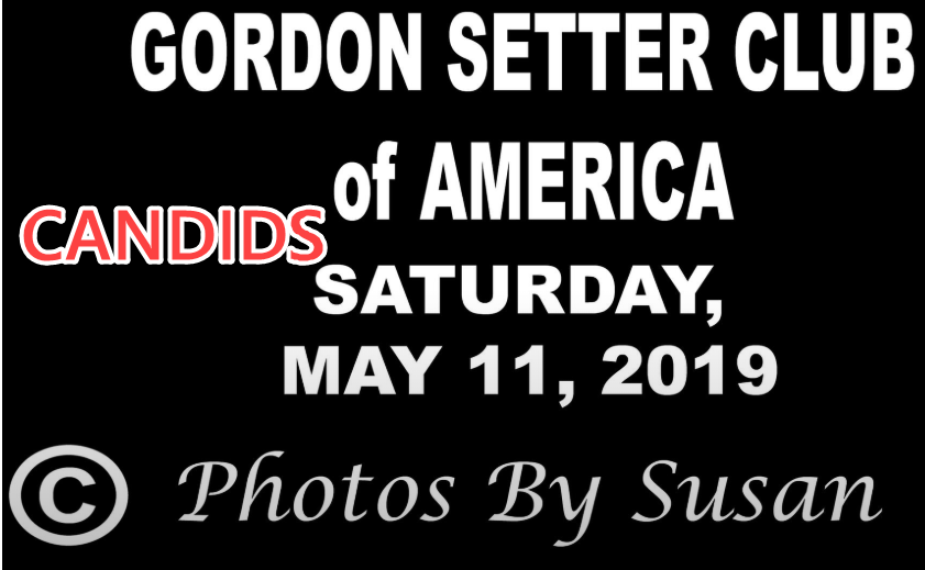 Candids for Gordon Setter Club of America - May 11, 2019