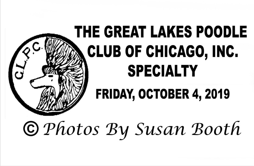 Great Lakes Poodle Club of Chicago Specialty